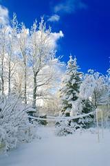 Selfoss (skolavellir12) Tags: garden snow home winter selfoss clean pure white blue