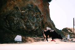 (sarahb.1) Tags: blue sea nature landscape coast algeria cow nikon mediterranean algerie algrie jijel d3100