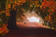 The only way out is through (skittledog) Tags: autumn trees leaves fog oxford