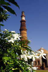 _DSC1026-001 (indutridibesh) Tags: morning flowers autumn india monument architecture outdoor minar qutabminar qutab