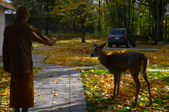 Tan Suvijjano beckons a deer