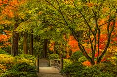 Japanese Garden Moon Bridge (Cole Chase Photography) Tags: autumn fall oregon canon portland october pacificnorthwest japanesegardens t3i japanesemaples moonbridge