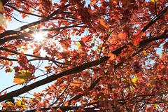 Autumn rays II (kwtracyghostship) Tags: park autumn light leaves interestingness oak hill flagstaff rays schenley kwtracyghostship