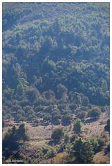 IMG_3222 (VDprisma) Tags: trees mountain nature forest canon landscape countryside sheep zoom contemporary hellas sigma greece fullframe naturephotography zoomlense ελλάδα kalidona canonphotographers ηλεία 150600mm canoneos5dmarkiii canon5dmarkiii eos5dmarkiii 5dmarkiii peloponnisosdytikielladakeio peloponnisosdytikielladakeionio 150600mmf563dgoshsm καλίδονα sigma150600mmf563dgoshsmcontemporary 150600mmf563dg f563dg