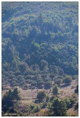IMG_3222 (VDprisma) Tags: trees mountain nature forest canon landscape countryside sheep zoom contemporary hellas sigma greece fullframe naturephotography zoomlense  kalidona canonphotographers  150600mm canoneos5dmarkiii canon5dmarkiii eos5dmarkiii 5dmarkiii peloponnisosdytikielladakeio peloponnisosdytikielladakeionio 150600mmf563dgoshsm  sigma150600mmf563dgoshsmcontemporary 150600mmf563dg f563dg