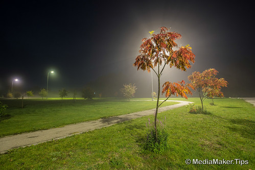 Ash tree at night with fog