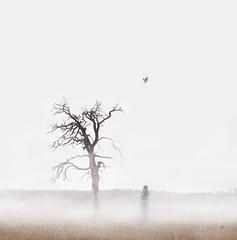 Time passing (veldreannija) Tags: old morning autumn white selfportrait tree bird fall nature field fog time fineart crisp deadtree crow blackbird fineartphotography