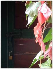 Privado .. (margabel2010) Tags: naturaleza hoja metal hojas rojo puerta madera rosa otoo yedra puertas airelibre candado granate solysombra candados