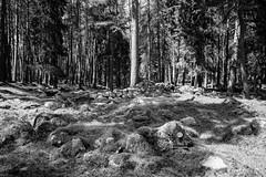 lt (Gary Massie) Tags: trees blackandwhite beautiful landscape scotland loch lochnagar beaut lochmuick