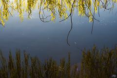 Stanley Park November 2015 (JWPhotowerks) Tags: park winter fog wildlife stanley urbanwildlife stanleypark