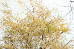 12141500100 (jolucasmar) Tags: otoo curso rivas vegetacin lagunas panormica cursofotografia