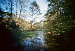 Pinhole Cypress Swamp 3 (Neal3K) Tags: reflections louisiana mandeville pinholecamera cypressswamp northlakenaturecenter vermeercamera