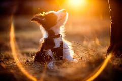 Week 36 - Puppy training (Wex Photographic) Tags: uk photography scotland clydevalley stuartstevenson wwwzerogravitymeuk