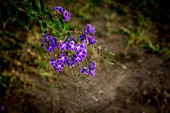 Santa Barbara CA plants art show-7 (Yasu Torigoe) Tags: thisphotorocks