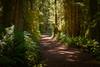 Path of Joy (briantolin) Tags: forest woods eastsookepark vancouverisland pacific rainforest nikond750