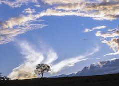(José Mauricio Garijo) Tags: sunset pordosol borebisp estânciaboavista sky silhuetas interiordesãopaulo céu coolpix p90 árvores árvore natureza landscape tree clouds nikon nuvens entardecer arrebol