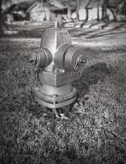 1908 Conley Senior Box Fire Hydrant Close Up Lens (rrunnertexas) Tags: conley boxcamera 4x5 bw sheetfilm 1908 firehydrant portraitattachment no3 fx39 ilford closeuplens meniscus lens