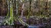 The swampland - Der Sumpf (ralfkai41) Tags: moss landscape winter nature wasser outdoor wald natur bäume trees moos water eis forest swampland supf woods landschaft hdr mud morast swamp ice sachsen saxonia schwepnitz wow