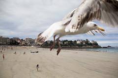 Photo Bombing (Ktoine) Tags: mouette bird seagull oiseaux bomb beach