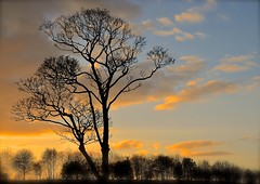Evening Sky (Edinburgh Photography) Tags: landscape nature outdoors sunset trees cramond nikon d7000