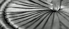 The Bottom (VenturaMermaid) Tags: bw macromondays macro closeup monochrome monochromatic tone lines leadinglines curve focus manualfocus detail dof canoneos tokina 100mm abstract hole