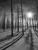 shadowtrees_BW (Drew Hamilton) Tags: nathab yellowstone wyoming