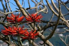 Beautiful Madeira (petrk747) Tags: funchal madeira portugal atlanticocean ocean sea cruise flora flowers flower nature travelling outdoor garden madeiraislands