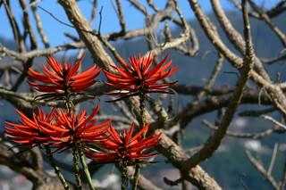 Beautiful Madeira
