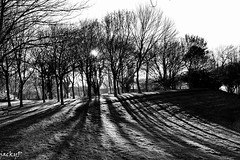 The shadow of the trees (Pierrot 49) Tags: nature winter blackandwhite blackandwhiteonly trees shadows noiretblanc nikonflickraward monochrome blancetnoir