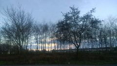 Westside Dawn (mcginley2012) Tags: trees cameraphone lumia1020 galway ireland morning spring