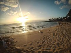 YDXJ0200 (Aschae) Tags: poipu poipubeach seal monkseal hawaii kauai
