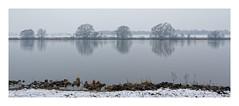 Wintermorgen an der Maas II (Babaou) Tags: niederlande nederland maas maasduinen hamert winter well limburgnoord limburgslandschap dxo spiegelung