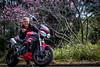 IMG_2431 (HoragamePhoto) Tags: sakura speedtriple