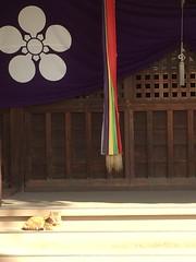 ひなたぼっこ (eyawlk60) Tags: 猫 ネコ ひなたぼっこ 日本 神社 cat japan jinja shrine