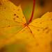 Flere høstbilder