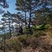 Hengekøye Odderøya