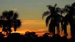 22 September Sunset (Jim Mullhaupt) Tags: pictures camera pink blue sunset red wallpaper sky orange sun color tree weather silhouette yellow clouds landscape photography gold evening photo nikon flickr sundown florida dusk snapshot picture palm exotic p900 tropical coolpix bradenton endofday cloudsstormssunsetssunrises nikoncoolpixp900 coolpixp900 nikonp900 jimmullhaupt