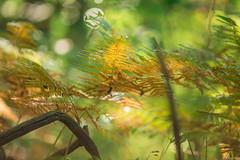 Autunno-2015-6 (Federico Fazzini) Tags: autumn italy colors forest raw liguria file autunno colori bosco foresta 200mm montoggio canon5dmarkiii federicofazzini