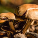 "2015_Champignons_Tervuren-9 • <a style=""font-size:0.8em;"" href=""http://www.flickr.com/photos/100070713@N08/21814421576/"" target=""_blank"">View on Flickr</a>"