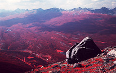 Infrared Rock On An Infrared Mountain (Photo Taker #9) Tags: infrared orangefilter colorinfraredfilm aerochrome
