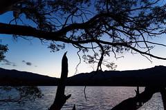 20151010-57-Evening light at Shadow Lake (Roger T Wong) Tags: trees camp silhouette trek outdoors evening nationalpark walk australia hike tasmania np bushwalk tramp wha shadowlake worldheritagearea cradlemountainlakestclairnationalpark sony2470 rogertwong sel2470z sonyfe2470mmf4zaosscarlzeissvariotessart sonya7ii sonyilce7m2 sonyalpha7ii