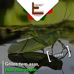 12122852_538864492929528_3417692387014755261_n (dedetizadoratservfranquia_tserv) Tags: abelha dengue barata insetos aranha ratos formiga escorpio cupim dedetizadora caixadegua franquiabarata portaiscapararatos