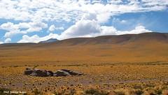 Altiplano Scene near Socaire, San Pedro de Atacama, El Loa Province, Antofagasta Region, Chile (Black Diamond Images) Tags: chile southamerica altiplano sanpedrodeatacama salardeatacama socaire tocanao reservanacionallosflamencos antofagastaregion elloaprovince