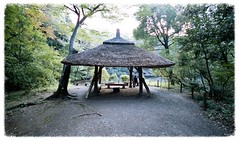 Pergola in Meiji-Jingu (Toudai) Tags: leica f45 fujifilm m5 15mm meijijingu superwideheliar