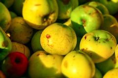 Apples (Gareth Christian) Tags: kwt 24120mm appleday boughbeech kentwildlifetrust festivalofapples nikond750