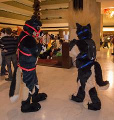 DSC_0064 (Acrufox) Tags: chicago illinois furry midwest december ohare rosemont convention hyatt regency 2014 fursuit furfest fursuiting acrufox mff2014