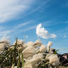 (SANGANO) Tags: sky cloud olympus move