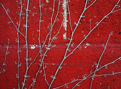 Ivy on Red brick (Wits End Photography) Tags: city red urban plant abstract building brick texture lines architecture catchycolors outside pattern exterior outdoor ivy vine structure minimal line diagonal minimalism simple metropolitan brickwork textured redandwhite