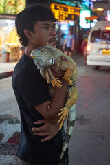 Livelihood (8mr) Tags: sad reality iguana wildlife thailand koh samui island livelihood poor poverty desperate no options imagine life low light street photography portrait tail claws reptile lizard