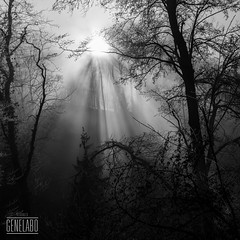 sun & fog in the morning (genelabo) Tags: genelabo pähler schlucht pähl bayern bavaria morning black white schwarz weiss sw bw monochrome trees sun fog sonne nebel morgen naturschutzgebiet 35mm carré quadrat square